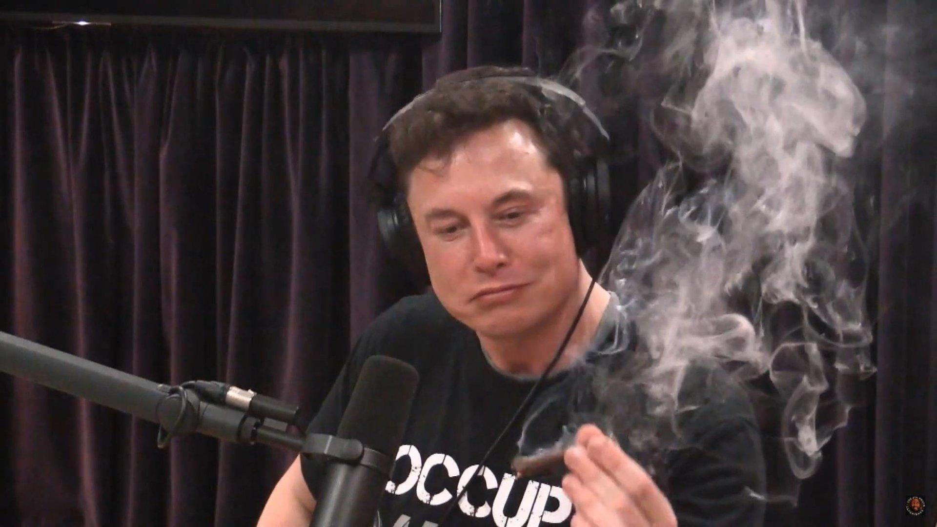 Elon Musk Peta